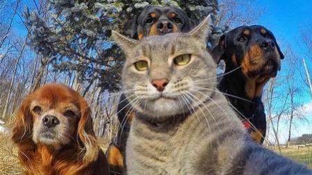 Sorria, você está na selfie! Nem os bichos escapam da moda