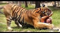 V�deo mostra tigre atacando e matando mulher na China